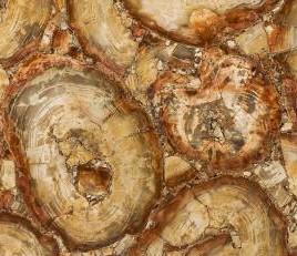 Détaille technique: PETRIFIED WOOD BROWN, pierre semi précieuse naturelle brillante de la Namibie