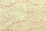 Détaille technique: PERLATO SICILIA  F, marbre naturel brillant italien