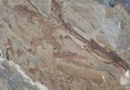 Détaille technique: ILLUSION BRONZE, marbre naturel brillant turc