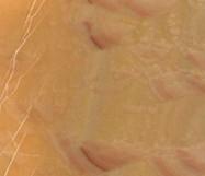 Détaille technique: HONEY ONYX, onyx naturel brillant turc