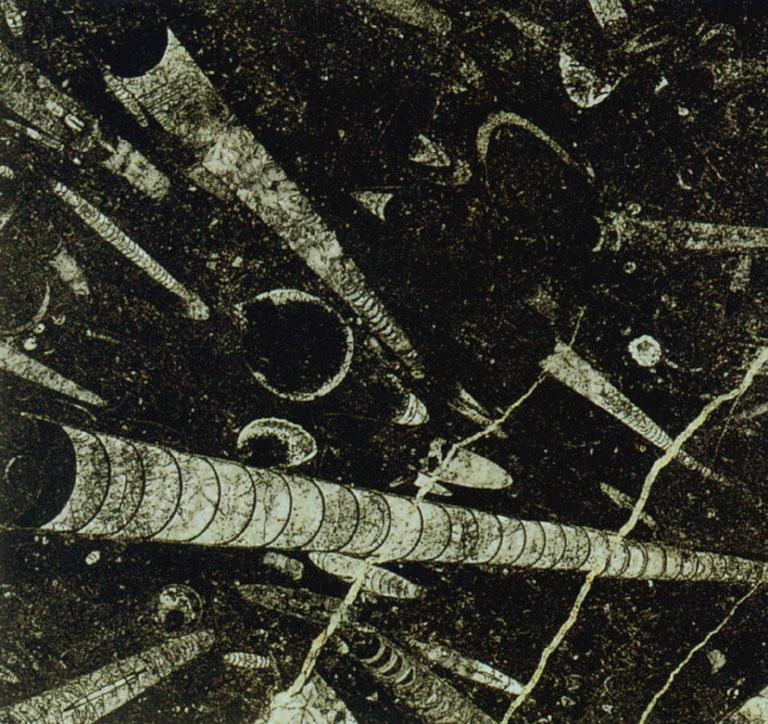 Détaille technique: FOSSIL BLACK, marbre naturel brillant marocain