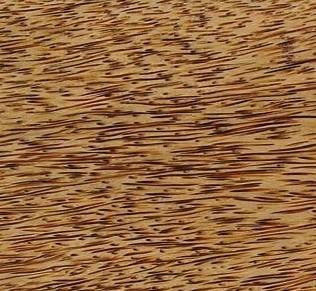 Détaille technique: Red Palm, palmier massif brillant indonésien